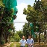 KISATO VIEW Kiến Tạo Không Gian Xanh Mát Cho Sân Vườn Nhà Bạn